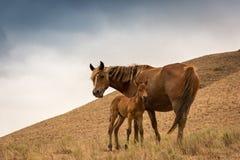 Конематка и осленок в горах стоковое фото