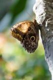 Конец-вверх бабочки Стоковые Изображения RF