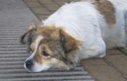 Конец-вверх бездомной собаки 3 Стоковые Изображения