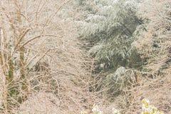 Конец-вверх белого ландшафта зимы Стоковые Изображения