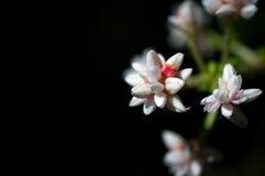 Конец-вверх белых цветков в саде/макросе белого цветка в лесе Стоковые Изображения