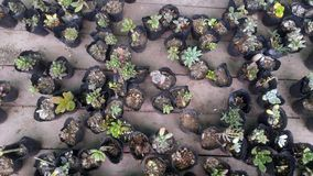 Конец-вверх бонзаев зеленого растения в ботаническом саде Стоковые Фотографии RF