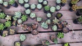 Конец-вверх бонзаев зеленого растения в ботаническом саде Стоковая Фотография
