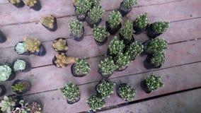 Конец-вверх бонзаев зеленого растения в ботаническом саде Стоковое Изображение RF