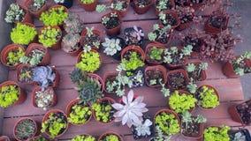 Конец-вверх бонзаев зеленого растения в ботаническом саде Стоковое Фото