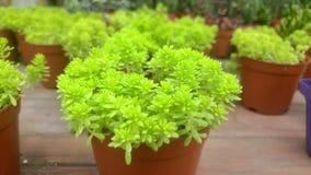 Конец-вверх бонзаев зеленого растения в ботаническом саде Стоковые Изображения