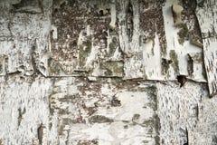 Конец-вверх бумаги естественной предпосылки текстуры расшивы березы Стоковое фото RF