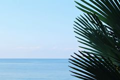 Конец-вверх ветвей ладони дерева против голубого моря неба и turguoise в дневном времени в естественных условиях стоковая фотография rf