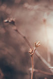 Конец-вверх ветвей падения против теплой предпосылки Брайна стоковые фото