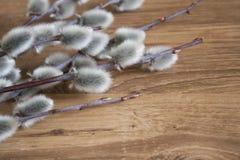 Конец-вверх ветви вербы Pussy на предпосылке средств цвета деревянной, взгляд сверху, настроении весны Стоковая Фотография RF