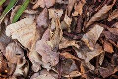 Конец вверх высушенных листьев в древесине Стоковое Изображение