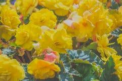 Конец-вверх в парке flowerbed солнечного дня желтых цветков Стоковая Фотография