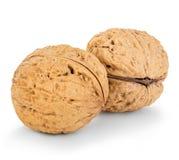 Конец-вверх грецких орехов изолированный на белизне Стоковая Фотография RF