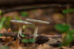 Конец-вверх гриба Стоковое Изображение