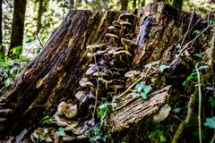 Конец вверх грибов на дереве Стоковые Изображения RF