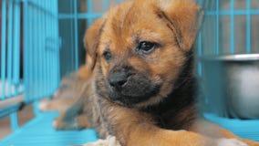 Конец-вверх грустного щенка в укрытии за загородкой ждать быть спасенным и принятым к новому дому Укрытие для концепции животных акции видеоматериалы