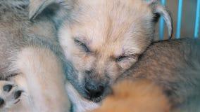 Конец-вверх грустного щенка в укрытии за загородкой ждать быть спасенным и принятым к новому дому Укрытие для концепции животных видеоматериал