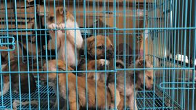 Конец-вверх грустных щенят в укрытии за загородкой ждать быть спасенным и принятым к новому дому Укрытие для животных сток-видео