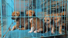 Конец-вверх грустных щенят в укрытии за загородкой ждать быть спасенным и принятым к новому дому Укрытие для животных видеоматериал
