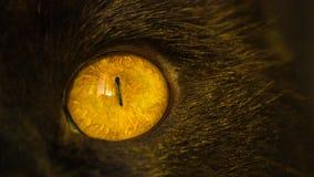 Конец-вверх глаза желтого цвета ` s черного кота на заходе солнца Стоковые Фотографии RF