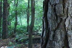 Конец-вверх дерева с большой расшивой с малым районом леса на заднем плане Стоковое Изображение RF