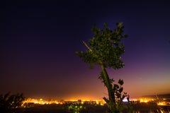 Конец-вверх дерева на ноче Стоковые Фотографии RF