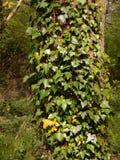 Конец вверх дерева предусматриванного в зеленых и желтых лист и leav Стоковые Фото