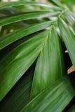 Конец-вверх детальных джунглей тропического леса выходит для предпосылки Стоковые Изображения RF