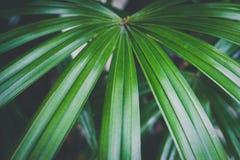 Конец-вверх детальных джунглей тропического леса выходит для предпосылки Стоковые Фотографии RF