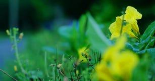 Конец-вверх желтых цветков, изумительный взгляд красочных желтых цветков в ландшафте сада и зеленой травы Стоковые Изображения