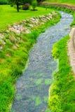 конец-вверх заводи и зеленой лужайки стоковые фотографии rf