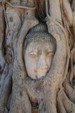 Конец-вверх загубил статую Будды головную поглощенную между корнями дерева на историческом парке, назначении перемещения на provi Стоковая Фотография RF