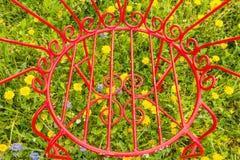 Конец-вверх зацветенного сада желтого одуванчика цветет Стоковая Фотография RF