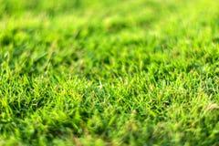 Конец-вверх зеленой травы в естественной запачканной предпосылке стоковая фотография