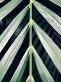 Конец-Вверх зеленых листьев пальмы в темной предпосылке стоковые изображения rf
