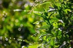 Конец-вверх зеленого растения с запачканной предпосылкой Стоковая Фотография RF