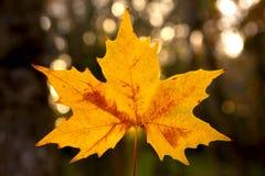 Конец-вверх лист осени красивого anf красочных стоковые изображения rf