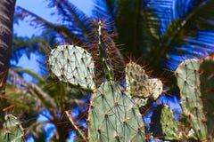 Конец - вверх кактуса в лесе ладони Стоковые Фотографии RF