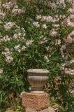 Конец-вверх камней и вазы с кустарниками и цветками на дугах-sur-Argens Les Стоковое Изображение