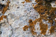 Конец-вверх камня покрытый лишайником Стоковое Фото
