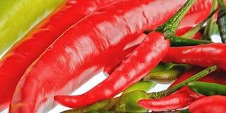 Конец-вверх кашевара Chili различный Стоковое Изображение RF