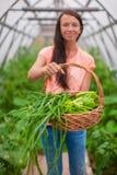 Конец-вверх корзины зеленеет в руках женщины Стоковое Фото