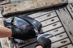 Конец-вверх коричневого surgeonfish на палубе стоковая фотография rf