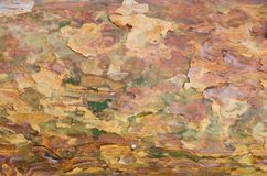 Конец-вверх коры сосны стоковые фото