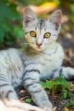 Конец-вверх кота улицы Стоковые Фото