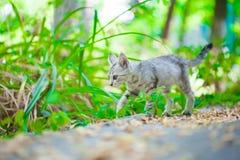 Конец-вверх кота улицы Стоковое Фото