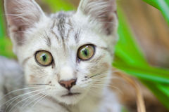 Конец-вверх кота улицы Стоковое Изображение RF