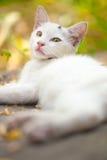 Конец-вверх кота улицы Стоковая Фотография