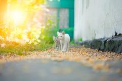 Конец-вверх кота улицы Стоковая Фотография RF