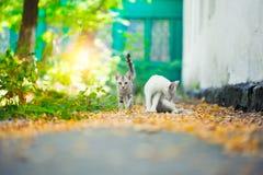 Конец-вверх кота улицы Стоковое фото RF